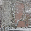 Snow in LSP-10
