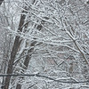 Snow in LSP-2