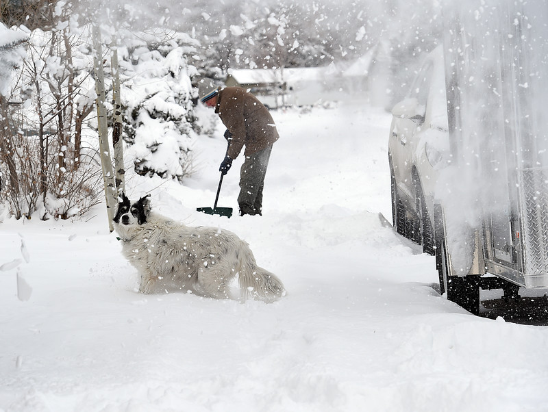 Zorra, a Border Collie mix, plays in the snow as Tom Van Duyne shovels snow Thursday, Jan. 5, 2017, on the 2500 block of Farisita Drive in west Loveland. (Photo by Jenny Sparks/Loveland Reporter-Herald)