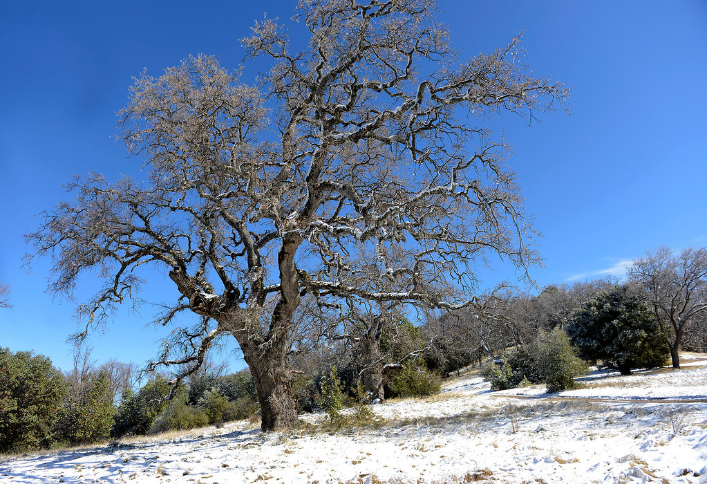 . Fresh snow clings to trees on Tassajara Road in Carmel Valley on Tuesday, Feb. 27, 2018.  (Vern Fisher - Monterey Herald)
