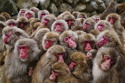 Monkeys huddle