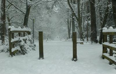 Snow on 2 Feb 2009 (40)