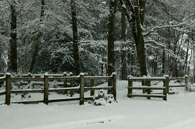 Snow on 2 Feb 2009 (39)