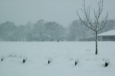Snow on 2 Feb 2009 (34)