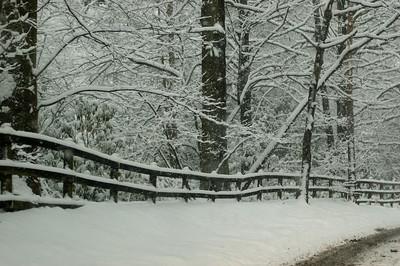 Snow on 2 Feb 2009 (28)