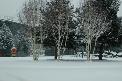Snow on 2 Feb 2009 (43)