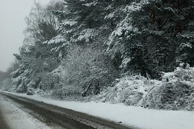 Snow on 2 Feb 2009 (23)
