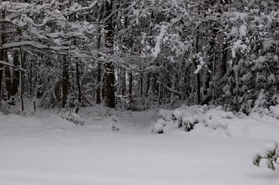 Snow on 2 Feb 2009 (41)
