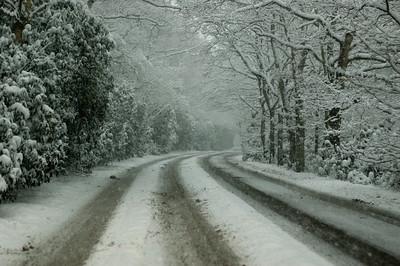Snow on 2 Feb 2009 (30)