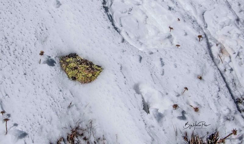 snow shoe 24.jpg