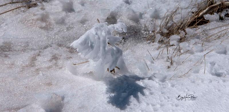 snow shoe 29.jpg