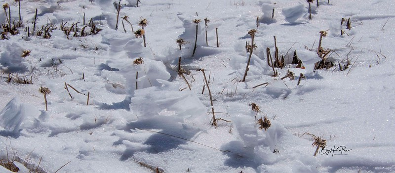 snow shoe 31.jpg