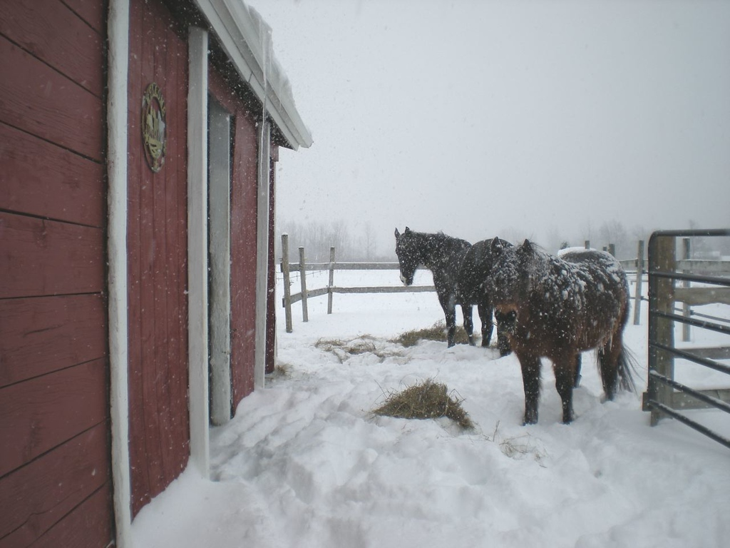. Horses in the Friday snowfall in Ortonville, the northern part of Oakland County. Photo submitted by Lorene Mollenhour.