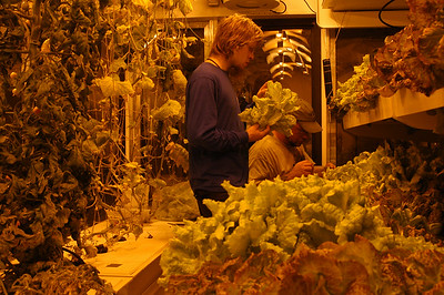 """SOUTH POLE STATION, ANTARCTICA: I'm also working at the greenhouse, or as it says on the sigh, the """"Growth Chamber."""" Here, Tyler and Dan harvest and check the lettuce before weighing it and sending it up to the galley to be used with tonight's supper."""