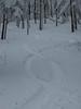 First Tracks in Weiss Knob Glades