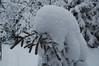 Snow goblin