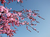 Blossoms against the sky