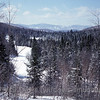 woodland-snow-2