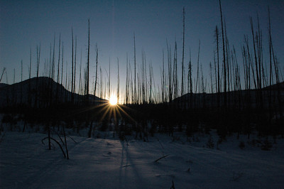 WHITE MOUNTAINS, ALASKA. The final glimmer of sunlight through a stand of barren trees.