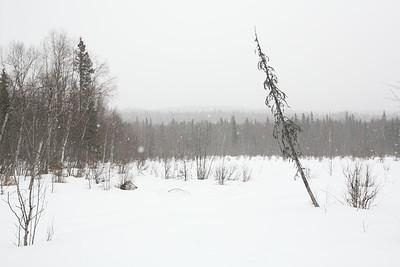 TALKEETNA, AK - Talkeetna Lakes Snowshoe Tour