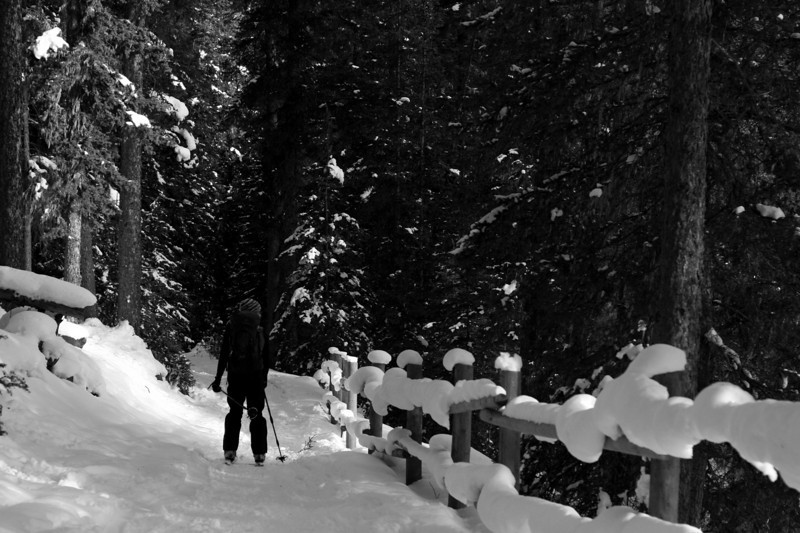 Alex starts the downhill to the Inkpots, past the picturesque snow covered wooden fence