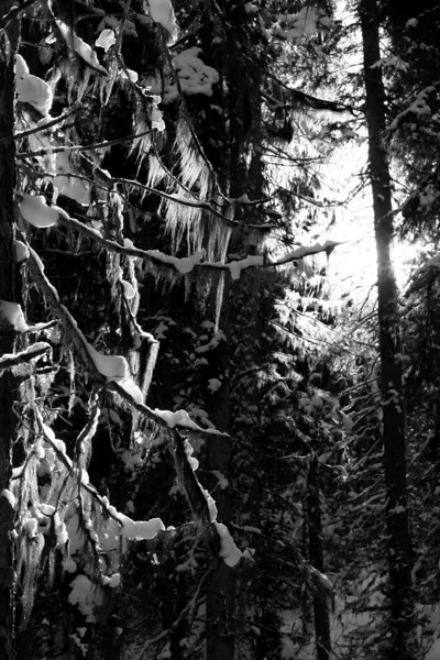 Trees with that ghostly planty stuff that hangs off them and looks interesting in the sunlight