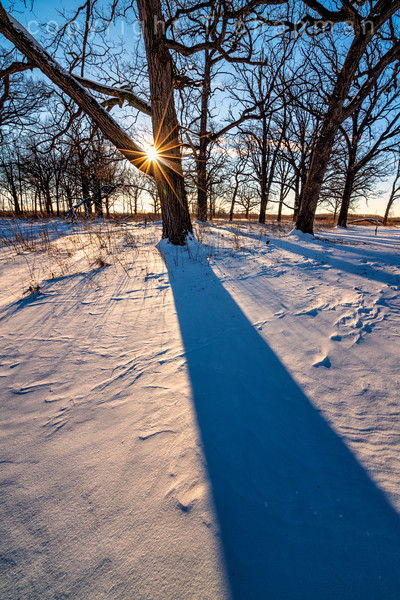 Tree Shadow on Snowy Morning