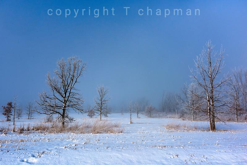 Snowy Field