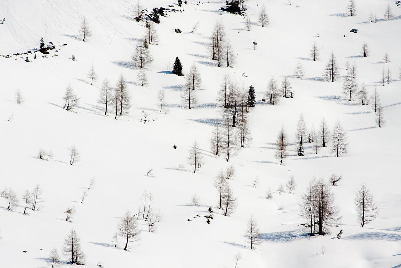 Trees dot the hillside in Turtmanntal, Wallis, Swiss alps