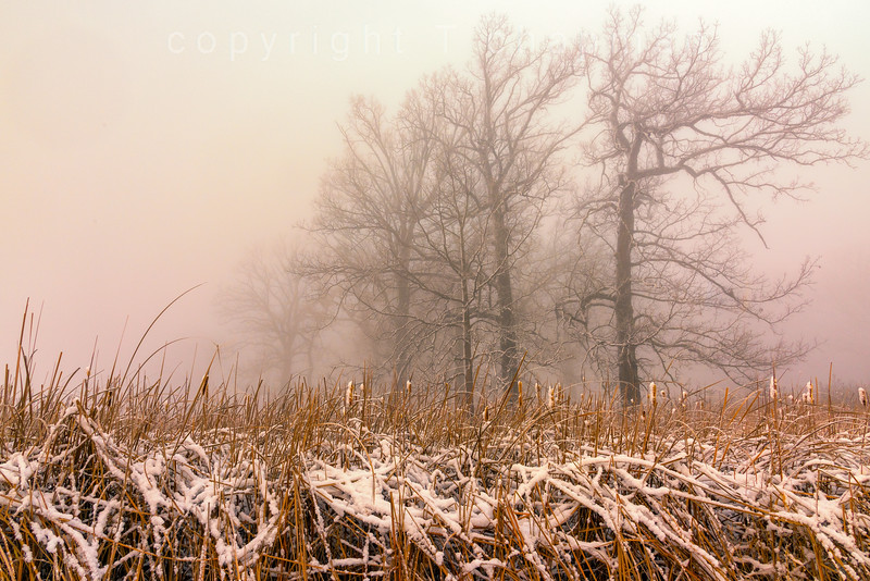 Winter Prairie Fog