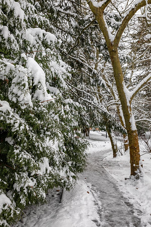 Snowday walkabout 2018