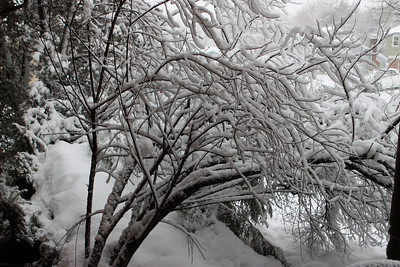 Blizzard of 2010 2.10.10