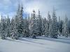 1931 Snowy trees