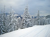 1982 snowy trees