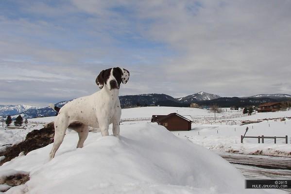 20150212 West Yellowstone 5