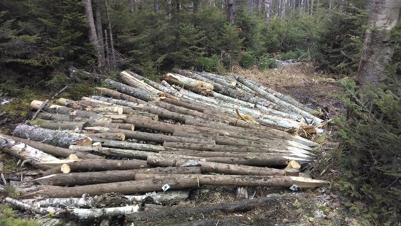 Cedar Matting After