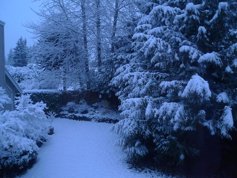 The view out my bedroom window when I woke this morning.