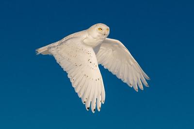 OWL_9634