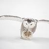 Snowy Owl Pounce