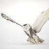 Snowy Owl Strike Liftoff