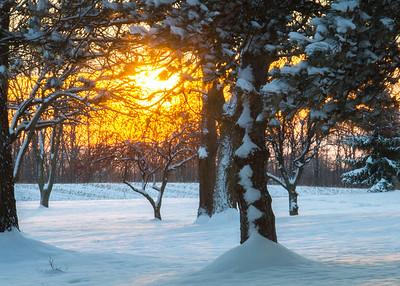 Snowy Sunrise  12-7-2013
