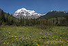 Mt Robson with wildflowers