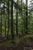 Rain forest, Capilano Suspension Bridge Park, Vancouver, BC