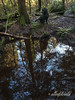 Reflections in a forest pond with dog, Vancouver, BC