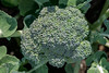 Broccoli macro from my garden.  Looks like it should be ready to eat when I return from my current trip.