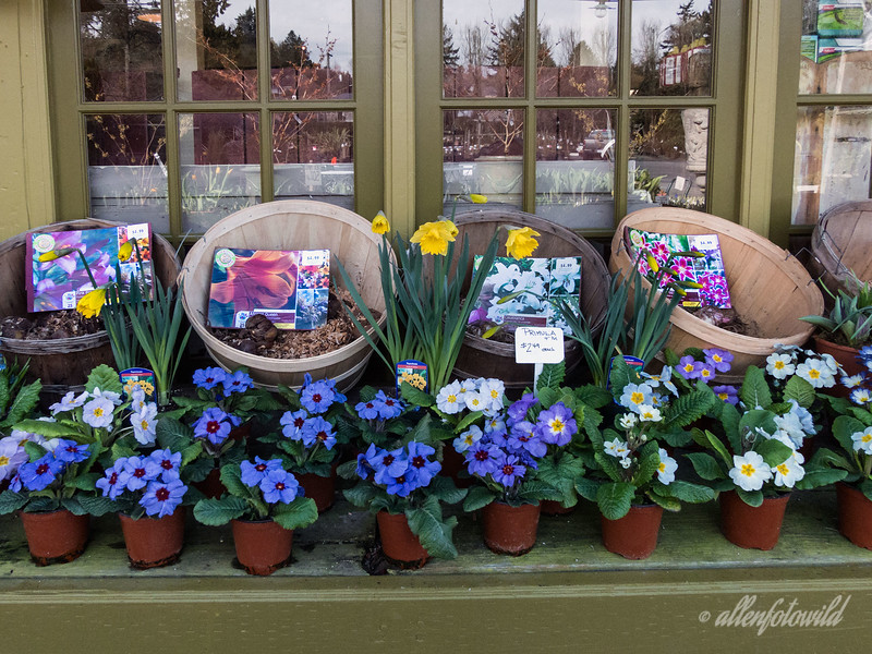 A display at the garden centre with reflections in the windows.