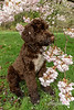 Posing with cherry blossoms