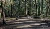 Sun-dappled path with dog, Vancouver, BC
