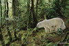 The last polar bear<br /> <br /> I photoshopped one of my polar bear pics into a tropical forest to make a statement about the rapid warming of the Arctic, which is endangering the very survival of the polar bears