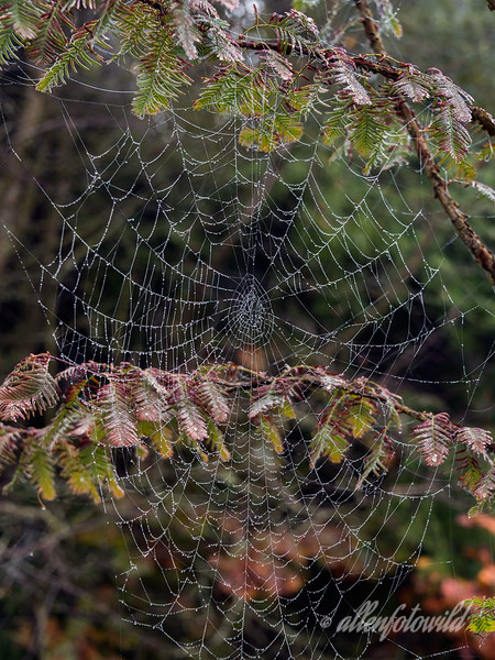 Fall leaves and spider web #1, Vancouver, BC